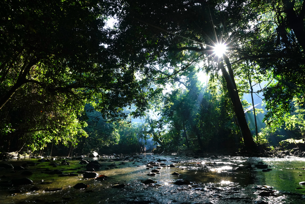 Pristine Rainforest Stream in Borneo, copyright Eric Madeja