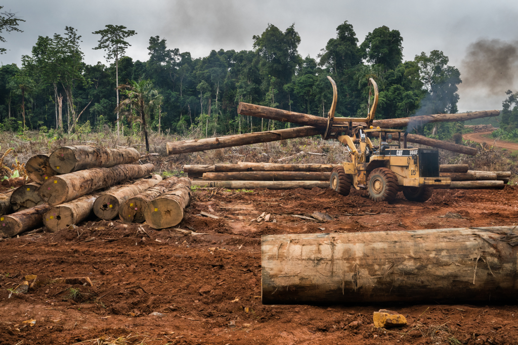 Borneo Logging Operation, copyright Eric Madeja